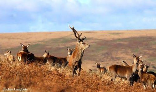 Quantock Deer Management & Conservation Group