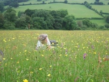 Aisholt Hay Meadows